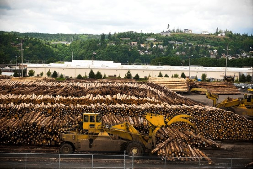 Logs that are set to be shipped to Asia fill the port one day in July.